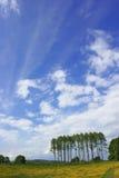 λεύκες λιβαδιών νεραγκ&o Στοκ φωτογραφίες με δικαίωμα ελεύθερης χρήσης