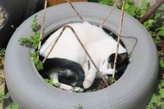 Ληφθείσα γάτα χαλάρωση και έτοιμος να βρωμίσει στοκ φωτογραφίες