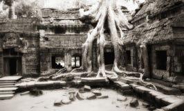 Ληφθείσα δέντρο κατοχή των τοίχων ναών TA Prohm στοκ φωτογραφία