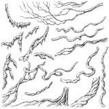 Λιάνα Branches Sketch Στοκ Φωτογραφίες