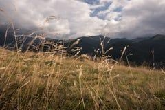 Λιβάδια βουνών κατά τη διάρκεια ενός απογεύματος φθινοπώρου στοκ εικόνα