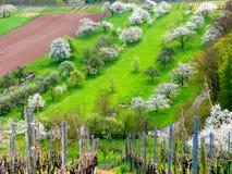 Λιβάδια οπωρώνων με τα ανθίζοντας δέντρα κερασιών Στοκ φωτογραφία με δικαίωμα ελεύθερης χρήσης