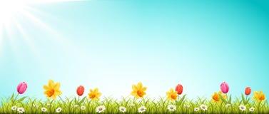 Λιβάδι άνοιξη με τα λουλούδια και το διάνυσμα ήλιων ελεύθερη απεικόνιση δικαιώματος