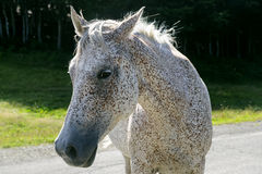 λιβάδι αλόγων appennino Στοκ φωτογραφίες με δικαίωμα ελεύθερης χρήσης
