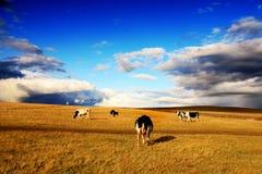 λιβάδι βοοειδών Στοκ φωτογραφία με δικαίωμα ελεύθερης χρήσης