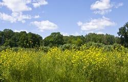 λιβάδι λουλουδιών κίτρι στοκ φωτογραφία με δικαίωμα ελεύθερης χρήσης