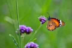 λιβάδι λουλουδιών πεταλούδων απογεύματος αργά φυσικό στοκ φωτογραφίες