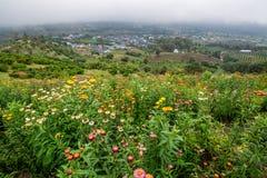 Λιβάδι λουλουδιών στο βουνό με την ελαφριά ομίχλη στο υπόβαθρο και την άποψη επαρχίας Στοκ Εικόνες