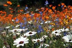 λιβάδι λουλουδιών Στοκ εικόνα με δικαίωμα ελεύθερης χρήσης