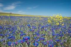 λιβάδι λουλουδιών Στοκ Φωτογραφία