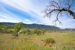 Λιβάδι παπαρουνών και ξηρό δέντρο, Catalunya, Ισπανία διάστημα αντιγράφων Διάστημα για το κείμενο Στοκ Φωτογραφίες