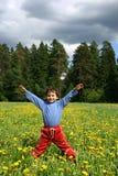 λιβάδι πικραλίδων Στοκ φωτογραφίες με δικαίωμα ελεύθερης χρήσης