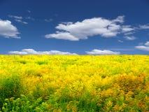 λιβάδι τοπίων κίτρινο Στοκ Εικόνες