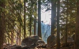 Λιβάδι του Forrest επάνω στα βουνά Στοκ φωτογραφίες με δικαίωμα ελεύθερης χρήσης