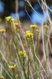 Λιβάδι των άγριων λουλουδιών Στοκ εικόνα με δικαίωμα ελεύθερης χρήσης
