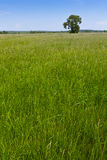 λιβάδι φυσικό Στοκ φωτογραφία με δικαίωμα ελεύθερης χρήσης