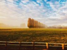 λιβάδι Στοκ φωτογραφία με δικαίωμα ελεύθερης χρήσης