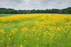 λιβάδι wildflower στοκ φωτογραφία με δικαίωμα ελεύθερης χρήσης