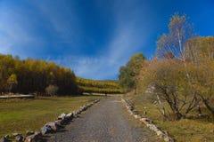 Λιβάδια δέντρων στοκ φωτογραφία με δικαίωμα ελεύθερης χρήσης
