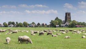 Λιβάδια που γεμίζουν με τα πρόβατα στην Ολλανδία Στοκ Εικόνες