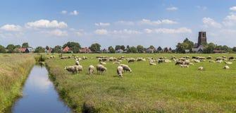 Λιβάδια που γεμίζουν με τα πρόβατα στην Ολλανδία Στοκ Φωτογραφίες