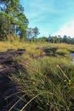 Λιβάδια στους λόφους ασβεστόλιθων στο γιο Thung μη Στοκ εικόνες με δικαίωμα ελεύθερης χρήσης