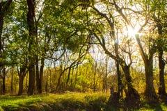 Λιβάδια φωτός του ήλιου Στοκ Εικόνες