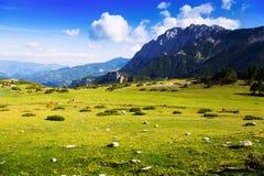 Λιβάδι βουνών Στοκ εικόνα με δικαίωμα ελεύθερης χρήσης