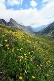 Λιβάδι βουνών Στοκ φωτογραφία με δικαίωμα ελεύθερης χρήσης