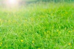 Λιβάδι και λουλούδια bokeh Στοκ εικόνα με δικαίωμα ελεύθερης χρήσης