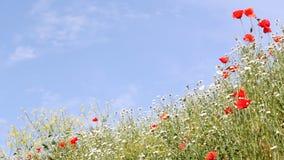 Λιβάδι με τα άγρια λουλούδια απόθεμα βίντεο