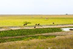 Λιβάδι με τα διαφορετικά ζώα Στοκ Εικόνες