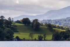 Λιβάδι με τη βοσκή των προβάτων κοντά στη λίμνη Windermere, Cumbria στην Αγγλία Στοκ Φωτογραφία