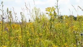 Λιβάδι με τη χλόη και λουλούδια που κυματίζουν στον αέρα απόθεμα βίντεο