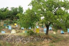 Λιβάδι με τις κυψέλες μελισσών Στοκ εικόνα με δικαίωμα ελεύθερης χρήσης