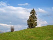 Λιβάδι με το ενιαίο έλατο στο λόφο Στοκ εικόνες με δικαίωμα ελεύθερης χρήσης