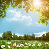 Λιβάδι ομορφιάς με τα λουλούδια μαργαριτών Στοκ Εικόνες
