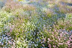 Λιβάδι λουλουδιών άνοιξη Στοκ εικόνα με δικαίωμα ελεύθερης χρήσης