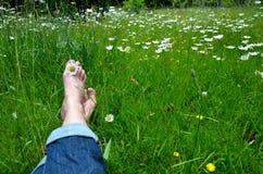 Λιβάδι λουλουδιών Στοκ φωτογραφίες με δικαίωμα ελεύθερης χρήσης