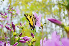 Λιβάδι πεταλούδων Στοκ φωτογραφία με δικαίωμα ελεύθερης χρήσης