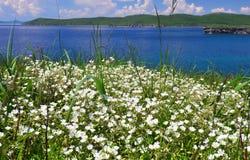 Λιβάδι των άσπρων λουλουδιών Στοκ φωτογραφία με δικαίωμα ελεύθερης χρήσης