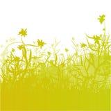 Λιβάδι, χλόη και λουλούδια Στοκ φωτογραφίες με δικαίωμα ελεύθερης χρήσης