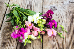 Λιβάδι Wildflower Antirrhinum στο ξύλο Στοκ Φωτογραφίες