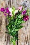 Λιβάδι Wildflower Antirrhinum στο ξύλο Στοκ Φωτογραφία