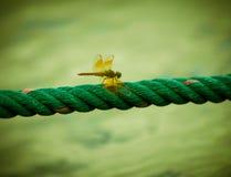 λιβελλούλη στο πράσινο σχοινί, εκλεκτής ποιότητας ύφος Στοκ φωτογραφίες με δικαίωμα ελεύθερης χρήσης