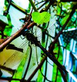 Λιβελλούλη Vino στοκ φωτογραφία με δικαίωμα ελεύθερης χρήσης