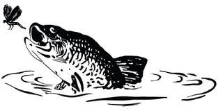 Λιβελλούλη κυνηγιών ψαριών διανυσματική απεικόνιση