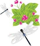 Λιβελλούλη που πετά πέρα από τα λουλούδια Στοκ εικόνες με δικαίωμα ελεύθερης χρήσης