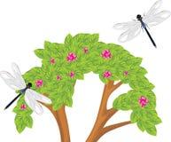 Λιβελλούλη που πετά πέρα από τον ανθίζοντας θάμνο Στοκ εικόνα με δικαίωμα ελεύθερης χρήσης