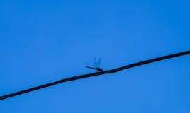 Λιβελλούλη σε ένα καλώδιο Στοκ φωτογραφία με δικαίωμα ελεύθερης χρήσης